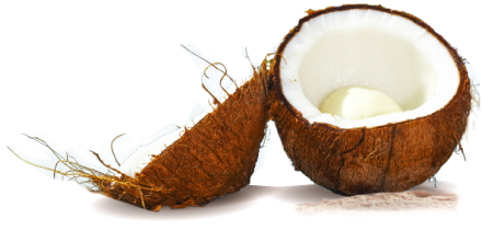 coconut-large